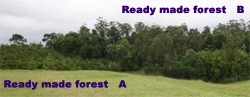 Ready Made Forests for Carbon Offseting
